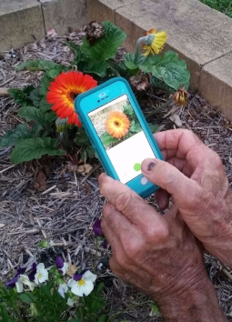 Plant Snap app, take a picture of the flower